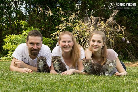Nordic Verden - Norvég Erdei Macskák - Üdvözlet