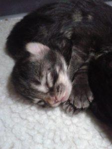 Hayley újszülött babái