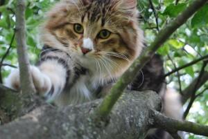 Lora fejjel lefelé mászik le a fáról