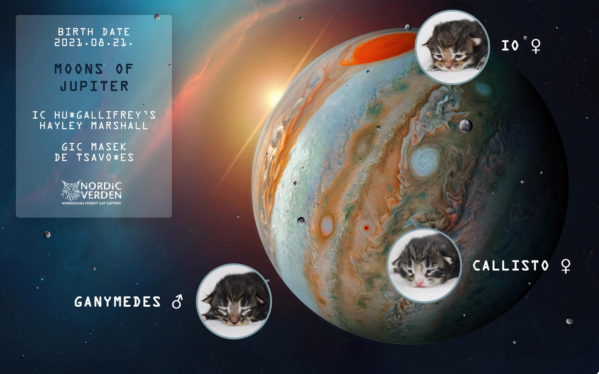 Nordic Verden - norvég erdei macska tenyészet - Moons of Jupiter alom