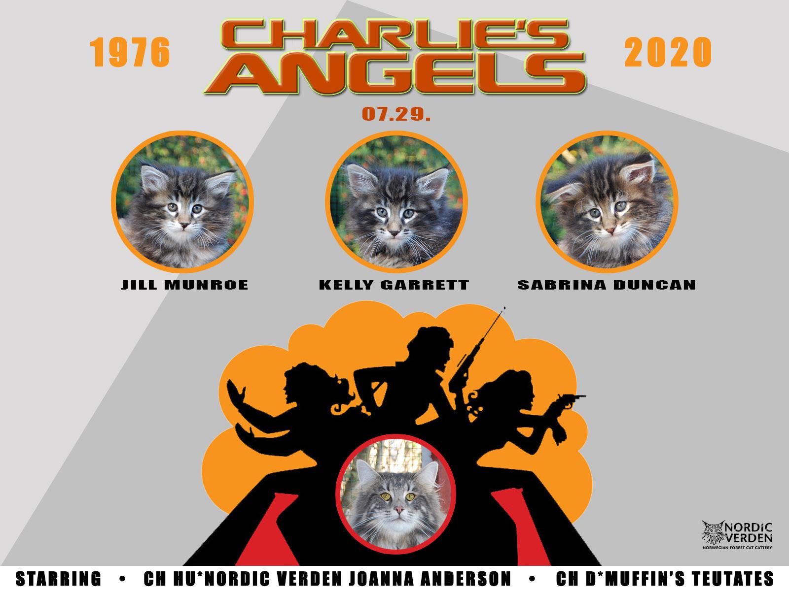 Nordic Verden - norvég erdei macska tenyészet - Charlie's Angels alom