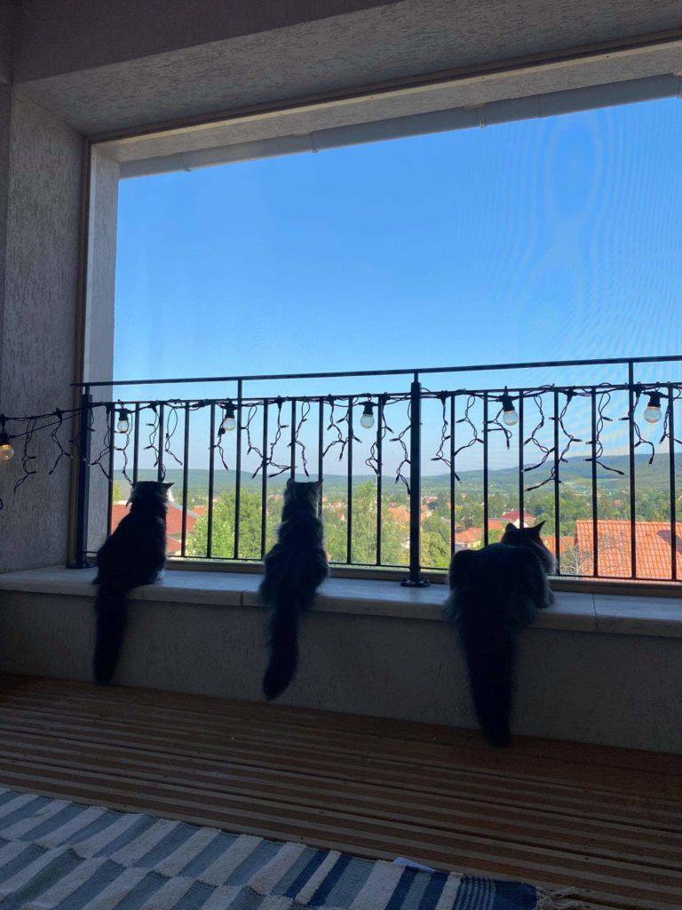 Norvég erdei nézelődés az új erkélyen.
