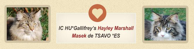 Hayley és Masek alom