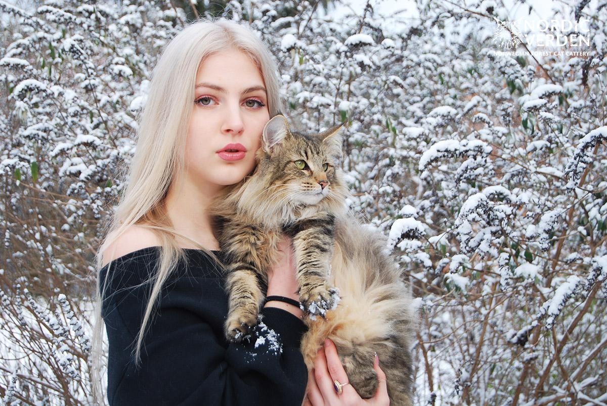 Hayley - norvég erdei macska - és Panka
