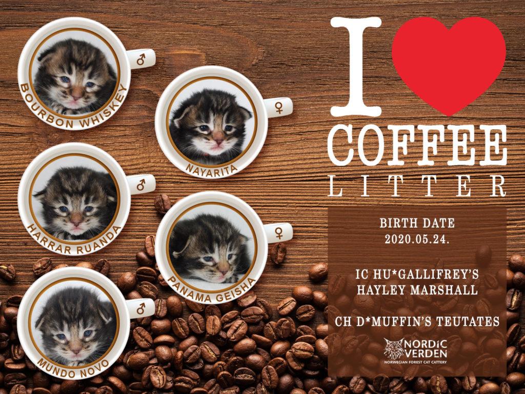 Nordic Verden - norvég erdei macska tenyészet - I love coffee alom
