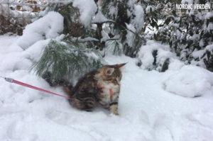 Lora tavaly az első hóban <3