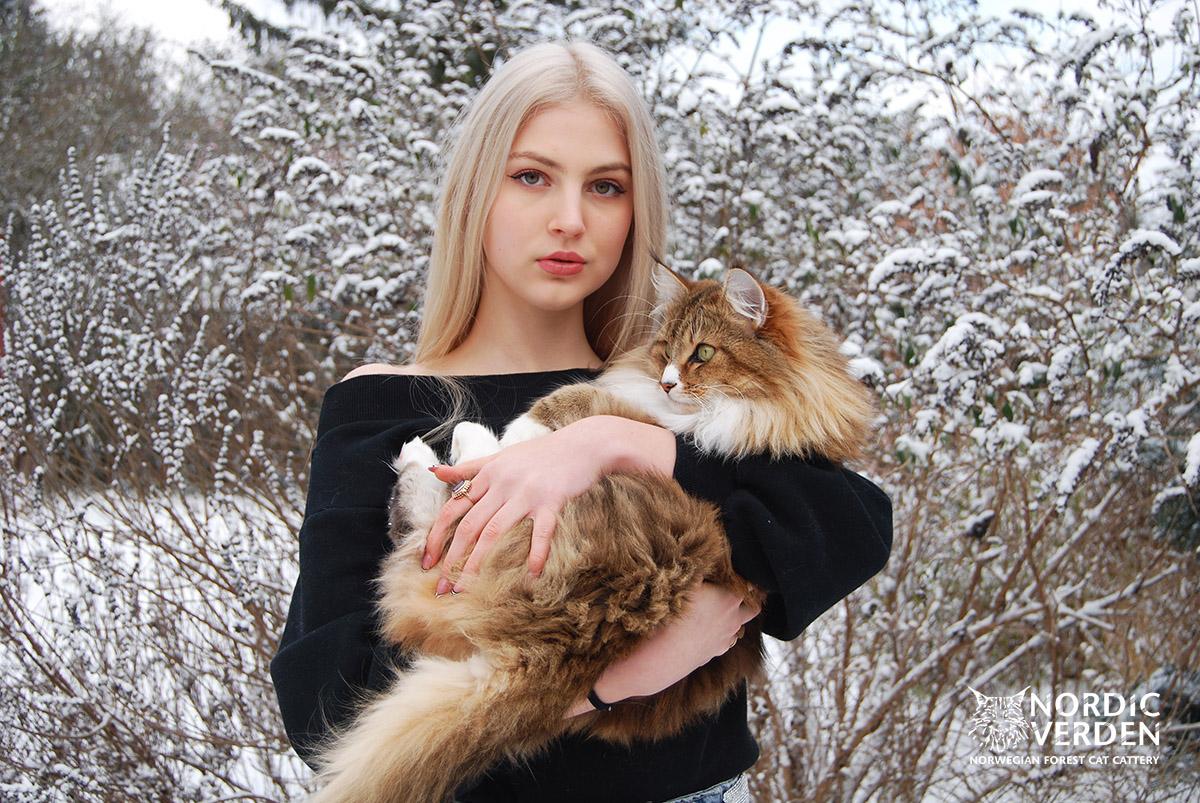 Lora - norvég erdei macska - és Panka