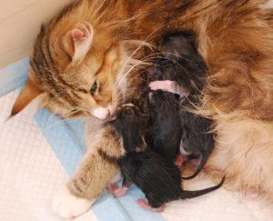 Lora szülése