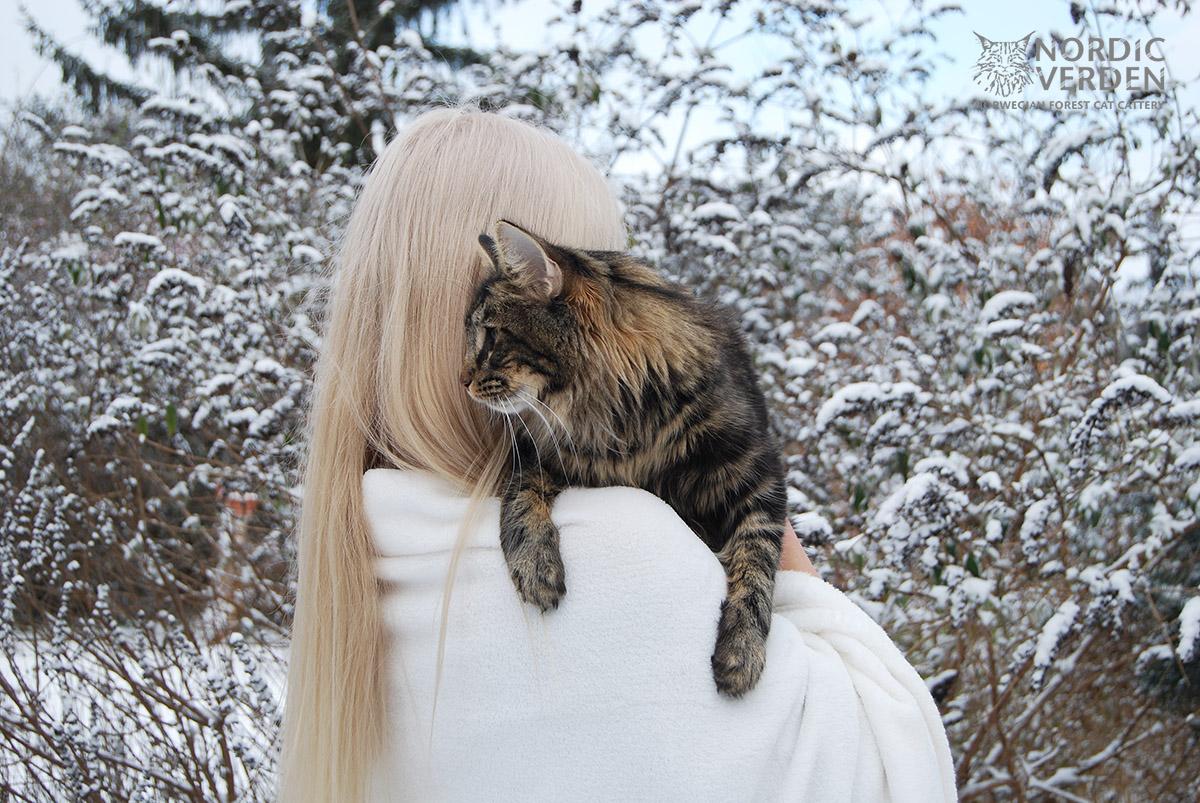 Nayeli - norvég erdei macska - és Panka