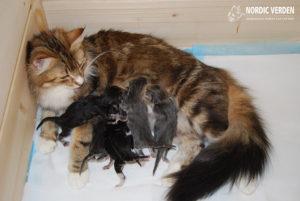 Lora és a kiscicák