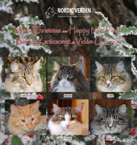 Nordic Verden - norvég erdei macska tenyészet - 2016 karácsony