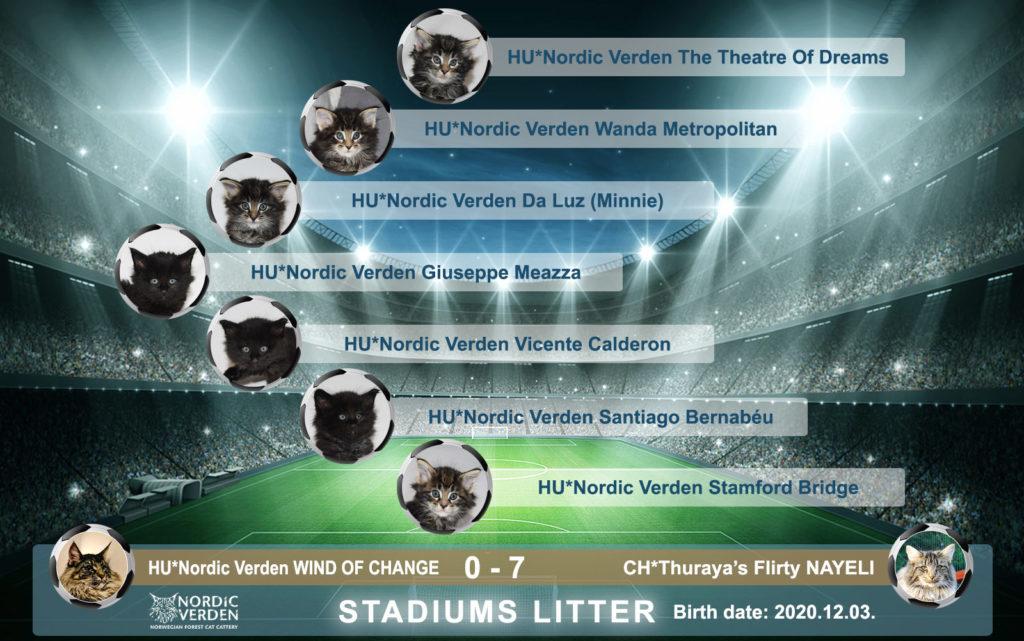 Nordic Verden - norvég erdei macska tenyészet - Football stadiums alom