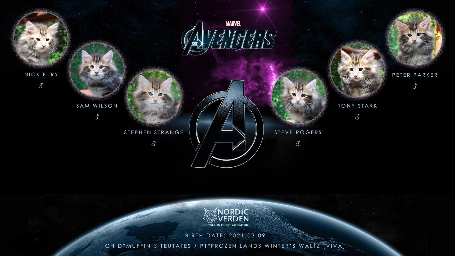 Nordic Verden - norvég erdei macska tenyészet - Marvel's The Avengers alom
