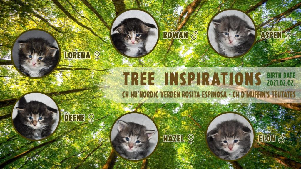 Nordic Verden - norvég erdei macska tenyészet - Tree inspirations alom