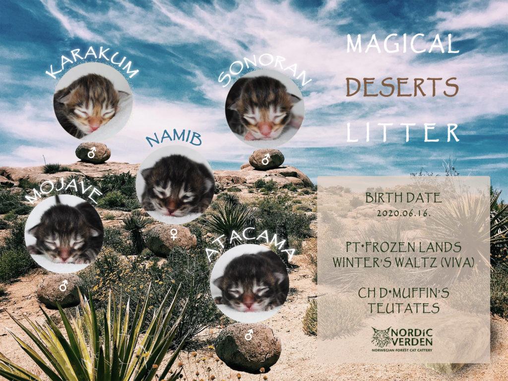 Nordic Verden - norvég erdei macska tenyészet - Magical deserts alom