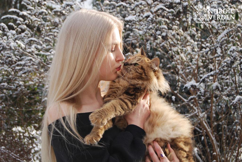 Viva - norvég erdei macska - és Panka