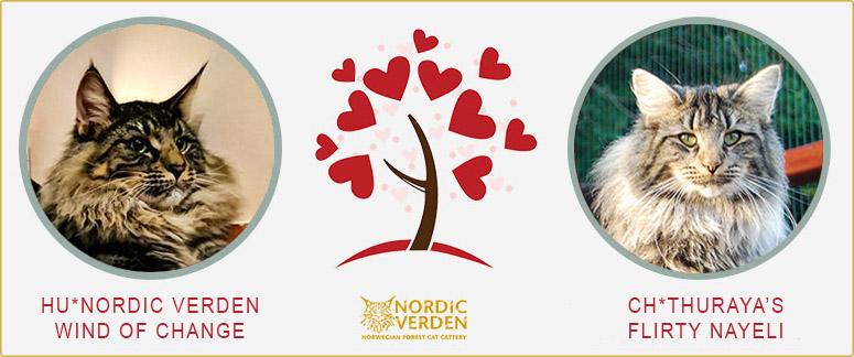 Wind és Nayeli - norvég erdei macska